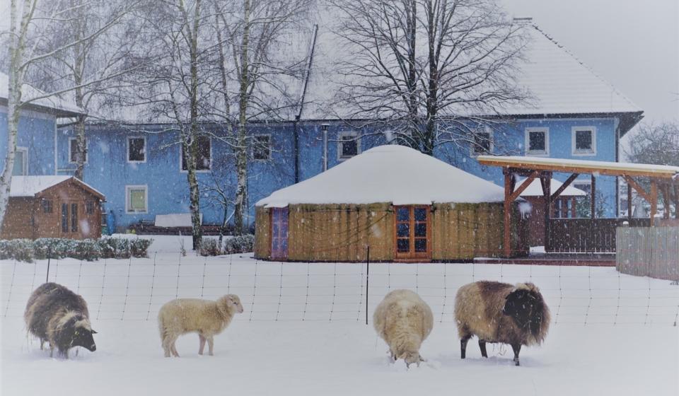 Schafe im Schnee und Jurte