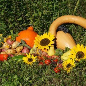 reiche Ernte aus dem Garten