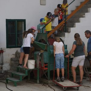 Kinder Beobachten Erdäpfelwaschen in Gemüsewaschmaschine