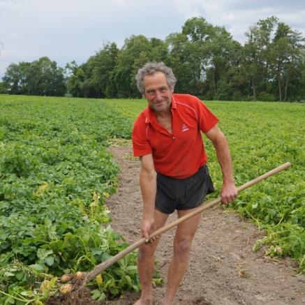 Bauer Hans beim Erdäpfel ausgraben