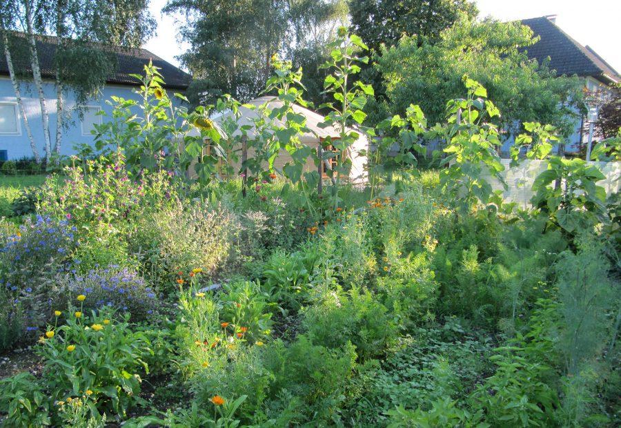 Der Garten in seiner Fülle